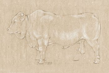 Pencil Drawing Bull